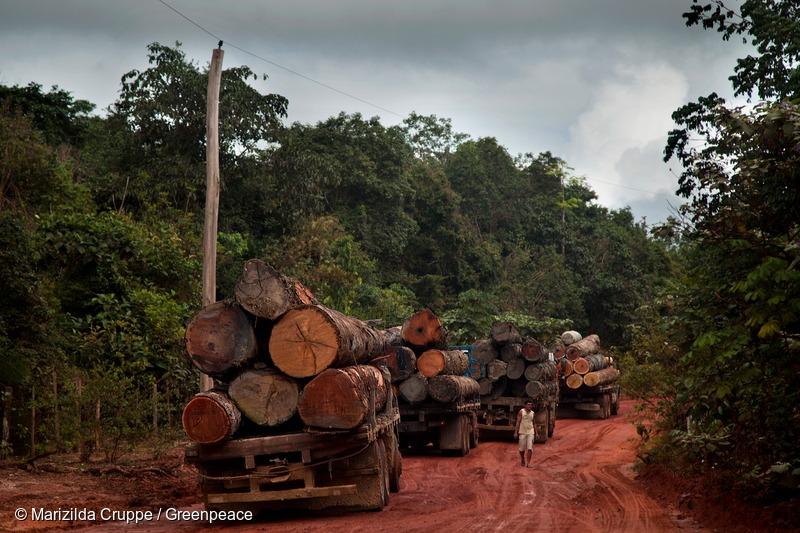 Logging Trucks in Para State
