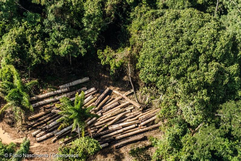 Logging in Santa Efigênia Forest Management Plan