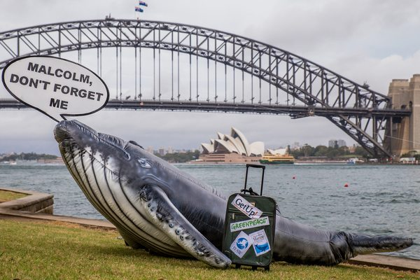 Delivery of Petition on Whaling at Australian PM in Sydney