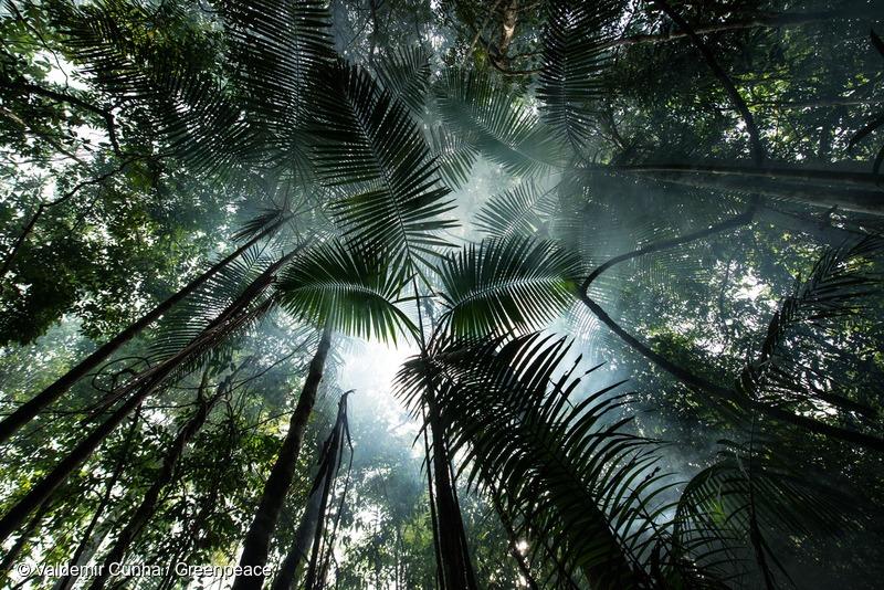 Forest near Tapajós River in the Amazon RainforestFloresta próxima ao Rio Tapajós