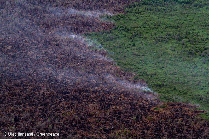 Burnt Forest in West Kalimantan, 3 Dec 2015