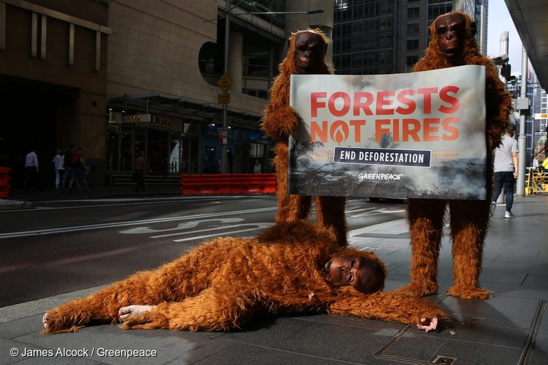 Greenpeace activists deliver petitions to PepsiCo, Colgate-Palmolive and Johnson & Johnson in Sydney. The companies use palm oil in a range of their products, but are failing to keep the 'no deforestation' promises they have made.