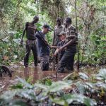 Scientific Research on Tropical Peatland in the Congo rainforest