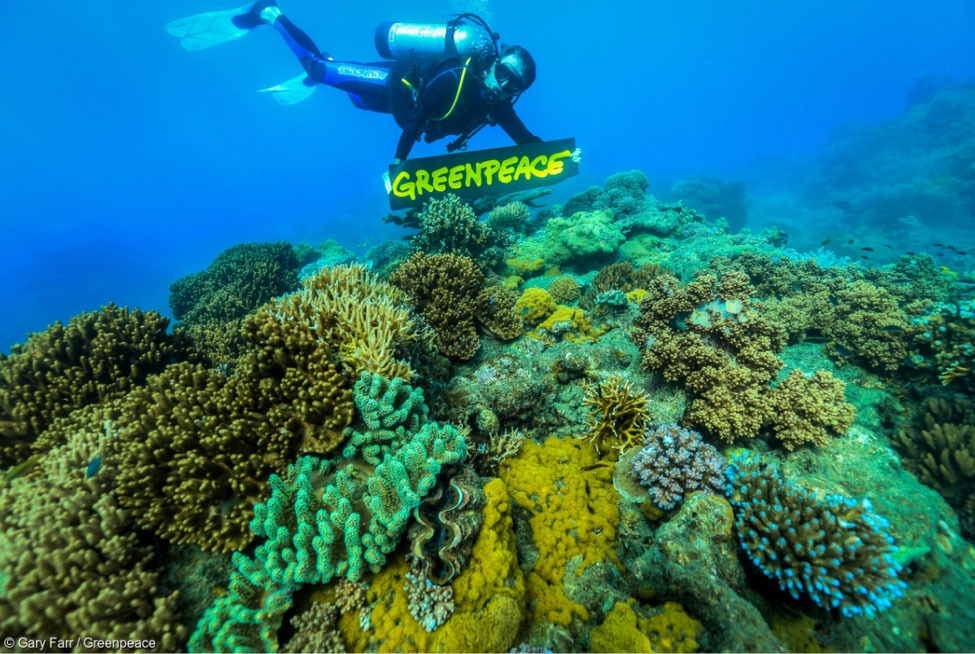 Activist scuba diving in the Great Barrier Reef to raise awareness
