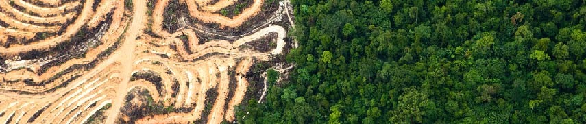 Land clearing in Indonesia to give way for palm oil plantations