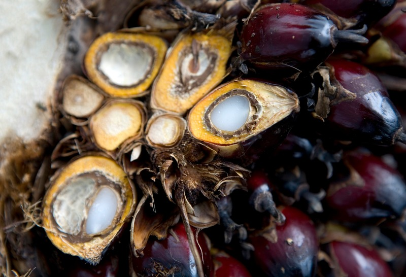 Palm oil fruits that have been halved. The flesh and the kernel will be used to create two different types of palm oil.