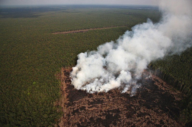 A forested area being cleared for palm oil plantations producing smoke and noxious fumes.