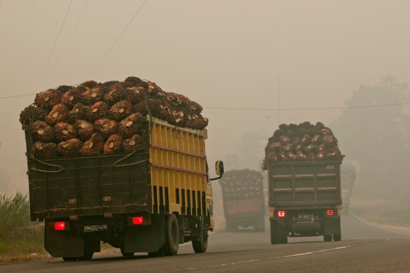 Trucks carrying away seeds containing palm oil from plantations. Poachers can use these roads to get access to the heart of dense rainforests.