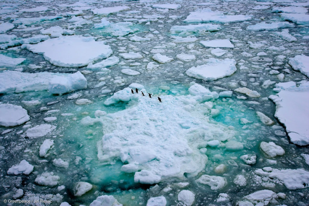 A group of Adélie Penguins on the Antarctic sea ice.