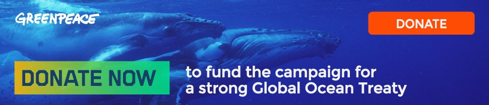 Protect the whales - donate now to help fund the campaign for a strong Global Ocean Treaty