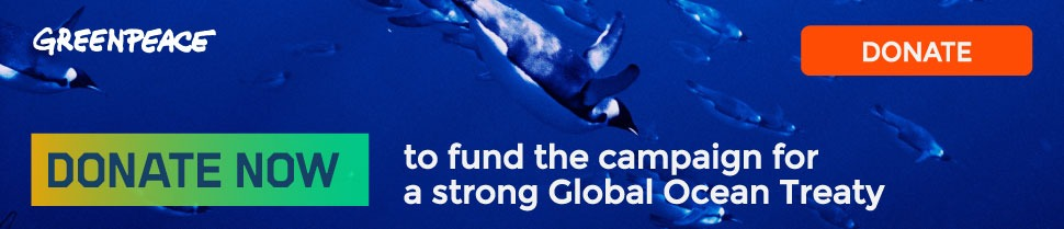 Protect the penguins - donate now to help fund the campaign for a strong Global Ocean Treaty